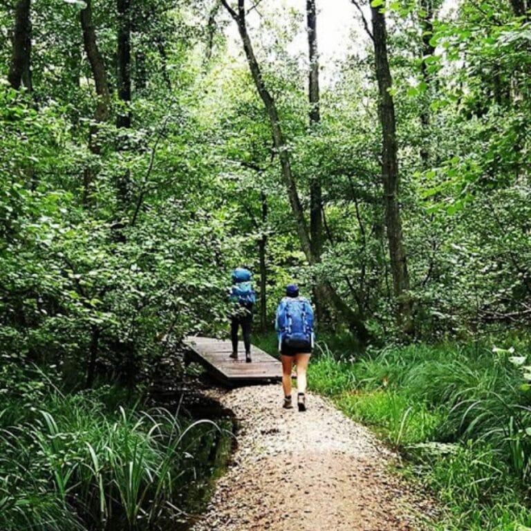 Flot skov vandreture Danmark